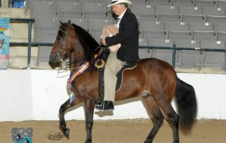 Pleasure Geldings for Gold Champion 2012