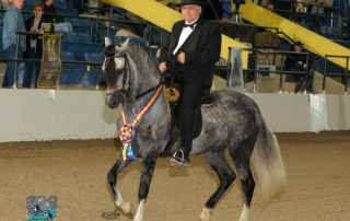 Classic Fino A/O Geldings for Gold Champion 2012