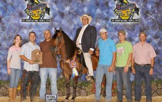 Pleasure Geldings for Gold Champion 2011